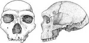 В Испании нашли останки неандертальцев