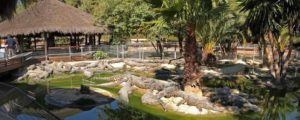 Крокодилья ферма в Торремолиносе